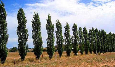 Parkwood Pines Wholesale Farm Tree Nursery