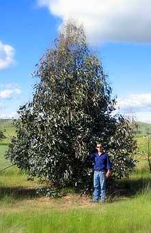 :: Parkwood Pines :: W...